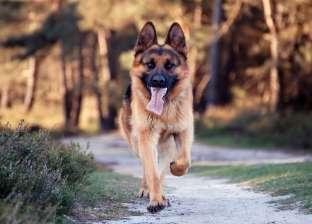 """""""الكلب روكي"""" يتسبب في حبس طالب ووالده 3 سنوات: """"عض بنت الجيران"""""""