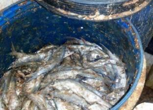 بالصور| وكيل وزارة الصحة بأسوان: ضبطنا 4200 كيلو سمك فاسد