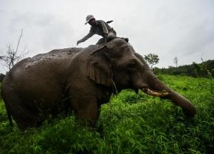 صورة سيلفي كادت تنهي حياة رجل وابنته: فيل ضخم حاول قتلهما «فيديو»