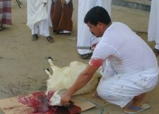 """""""الإفتاء"""" توضح حكم ذبح الأضحية في ليالي أيام النحر"""