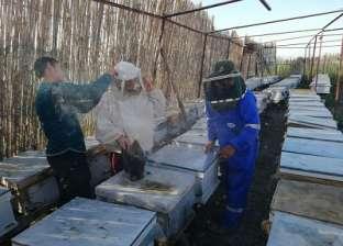 """نصائح بتناول عسل النحل في الشتاء: قيمته الغذائية أعلى """"في البرد"""""""