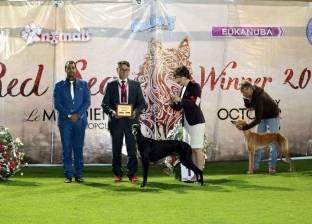 """""""تربية الكلاب"""" تنظم مسابقة عالمية لتنشيط السياحة بالغردقة سبتمبر المقبل"""