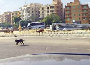 عقرتهم كلاب مسعورة في الطريق العام.. إصابة 18 شخصا في الغربية