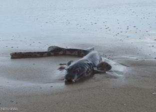 وسط قلق البعض.. ظهور كائن غريب في أستراليا يشبه سمكة القرش