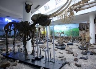 بالصور| تحوي محنط منذ 4 ألاف عام.. جولة بالمتحف الحيواني في الجيزة