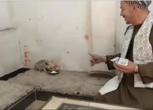 «طلبة» من صياد زواحف وثعالب للشهرة على «يوتيوب»: بوفر معلومات عن الحيوانات