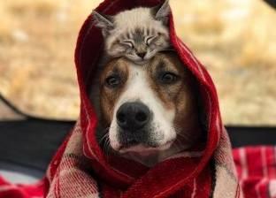 """بالصور  """"الكلب هنري والقطة هريرة"""".. أسعد حيوانين يسافران حول العالم"""
