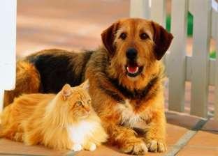 """تربية الحيوانات الأليفة تحمي أصحابها من الوفاة بـ""""السكتة الدماغية"""""""