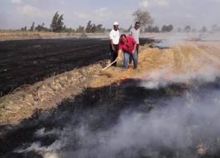 """تحرير 61 محضر """"حرق قش الأرز"""" في كفر الشيخ"""