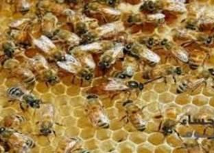 """""""تربية النحل"""" تتحول من هواية إلى مصدر دخل للعديد من الأسر اللبنانية"""