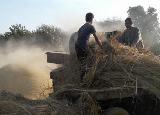 """""""البيئة"""": محافظة البحيرة شهدت عمليات بيع وشراء قش الأرز على نطاق واسع"""