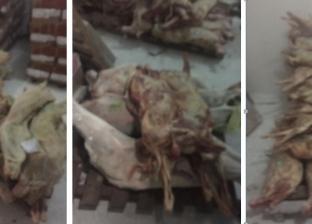 ضبط 171 خروف مبرد فاسد في ثلاجة مجمع استهلاكي بالإسكندرية
