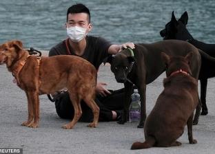 """""""هيشموا الفيروس"""".. العلماء يدربون الكلاب لاكتشاف حاملي كورونا"""