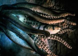 العثور على آثار لوحش مجهول في قاع المحيط الهادئ