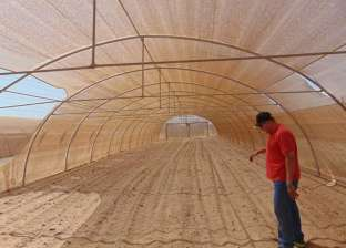 رئيس مدينة الشلاتين يتفقد المشروعات الزراعية بمنطقة وادي حوضين