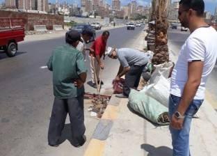 حي المنتزه أول يشن حملة لإزالة الأتربة بالطريق الدولي في الإسكندرية