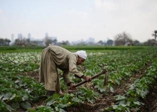 «160 مليون نسمة فى 2050».. هل ستصمد مصر فى مؤشرات الأمن الغذائى؟