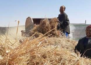 «القرش»: نجاح زراعة القمح مرتين في السنة تجربة تستحق الدراسة
