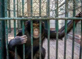 حديقة الحيوان.. «جوهرة تاج حدائق أفريقيا»