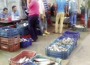استقرار أسعار الأسماك اليوم.. والبلطي بـ 24.5 جنيه للكيلوجرام