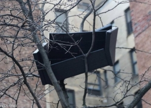 """مشهد يحير أهالي أمستردام بنيويورك.. """"أريكة ضخمة عالقة فوق شجرة"""""""