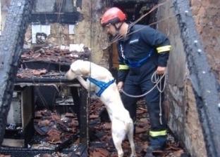 """""""ساعد في العثور على ضحايا هايتي"""".. """"كراكر"""" كلب كشف العديد من الجرائم"""