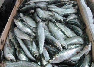 ضبط أسماك مملحة غير صالحة للاستخدام الآدمي في المنيا