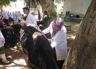 """""""الزراعة"""" تُحصن 2.4 مليون رأس ماشية ضد الحمى القلاعية"""