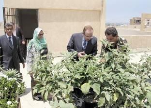 زراعة أسطح محافظة بنى سويف.. الفاكهة فى يد الجميع