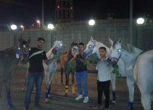 بالصور| تصدير 9 خيول عربية إلى ألمانيا