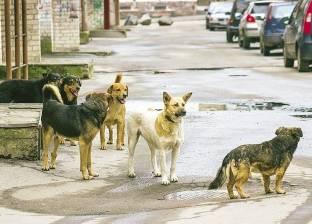 دراسة: 22 مليون كلب ضال في شوارع مصر ويصلون لـ44 مليونا في 2028