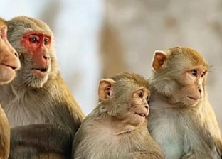 16 معلومة عن جدري القرود.. يصيب الأعضاء التناسلية