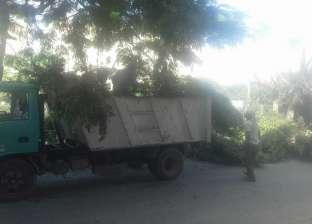 تقليم وتهذيب الأشجار بوسط الإسكندرية