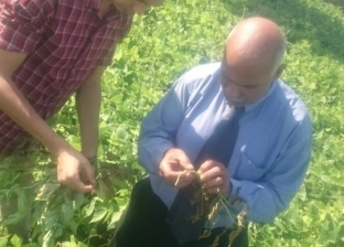 """""""الزراعة"""": لجان لفحص زراعات الفاصوليا بمركز أبو المطامير بالبحيرة"""