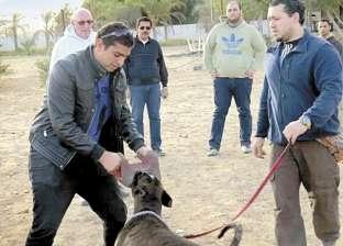 تحذير من شركات تدريب الكلاب: تستعين بأنواع محلية غير مؤهلة