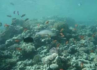 8 مايو.. محاكمة 24 من أصحاب المراكب السياحية بتهمة تدمير الشعاب المرجانية