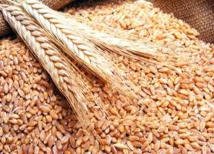 توقعات بزيادة محصول القمح المحلي في مصر 4.3% الموسم المقبل