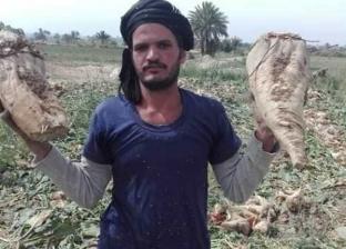 """""""زراعة كفر الشيخ"""": حصاد 133 ألف فدان محاصيل شتوية"""