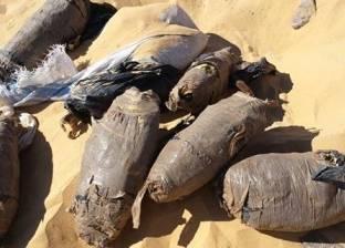 ضبط طن من نبات البانجو المخدر بشمال سيناء