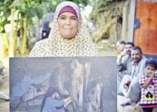 «كريم» يوثق حياة والدته بالصور.. «زراعة وجاموسة وتنظيف»