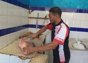 ضبط 60 كيلو أسماك سامة في الإسكندرية