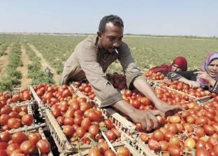 """""""الحكومة"""" تنفي انتشار فيروس مجهول يهدد مزارع الدواجن بالمنوفية"""