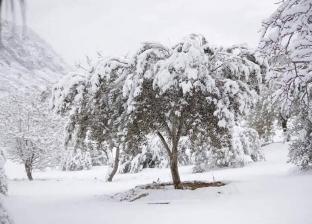 الثلوج تزيّن جبال سانت كاترين.. والبيئة للسائحين: تمتعوا بالجو الساحر