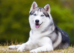 """كلب يتسلل ليلا ليسرق أيس كريم ويخفي آثار """"جريمته"""" في القمامة (فيديو)"""