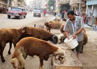 الشرقية: التجار يخفضون الأسعار.. والأهالى: «مش هنشترى.. كفاية علينا المدارس»