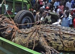 «أسامة الخطير».. القبض على تمساح قتل 80 شخصا في أوغندا (صور)