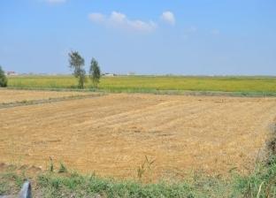 محافظ بورسعيد يكلف بإزالة 13 ألف فدان مزارع سمكية مخالفة