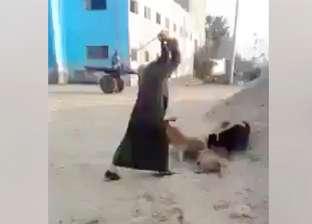 بالفيديو| شخص بالدقهلية يقتل كلبا بوحشية.. و3 كلاب أخرى تحاول إنقاذه