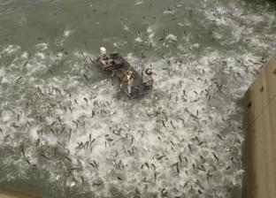 فيديو.. السر وراء تقافز مئات الأسماك حول قارب أمريكي في مقطع متداول