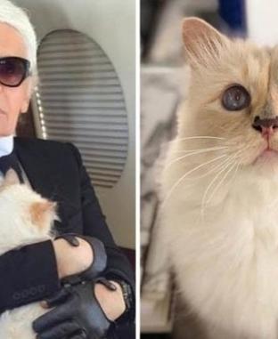 """200 مليون دولار في انتظار """"قطة"""" كارل لاجرفيلد"""